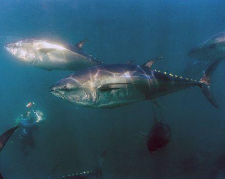 enge zee dieren