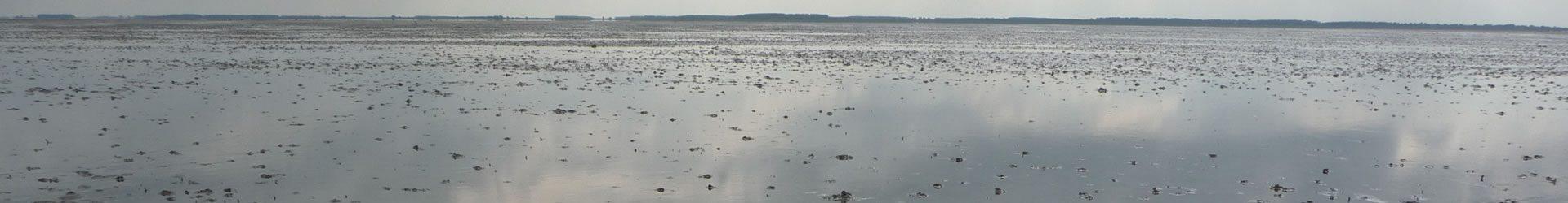 Wildernis op zee: zeereservaten