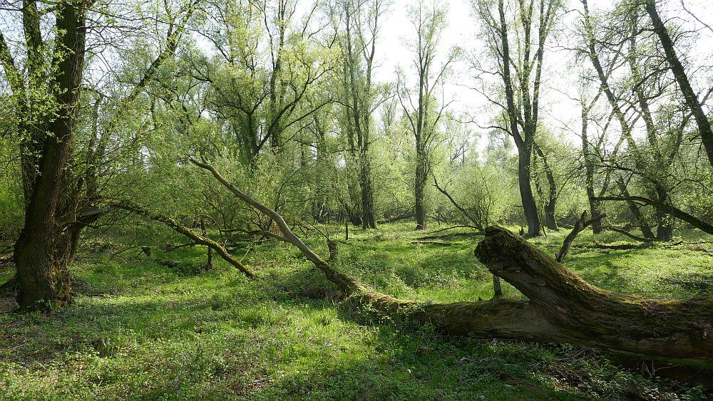 © Stefan Pasma, Ongerepte-Natuur.nl
